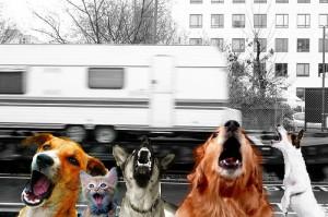 chiens-aboient-caravane