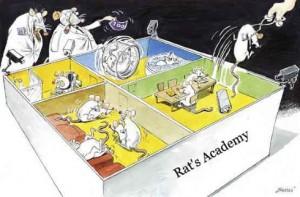 Au vu des études, la première conclusion: il ne fait pas bon se réincarner en rat ou en souris de laboratoire!